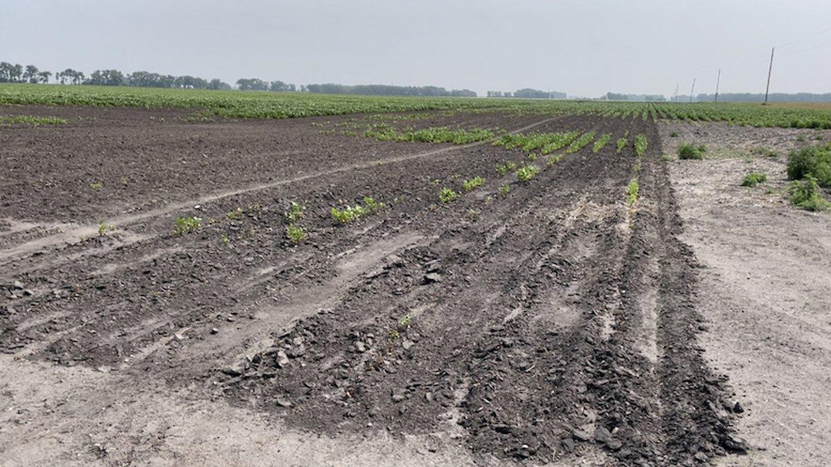 Gov. Tim Walz visits farmers amid drought