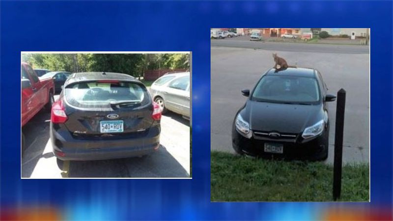 2014 black Ford Focus reported stolen