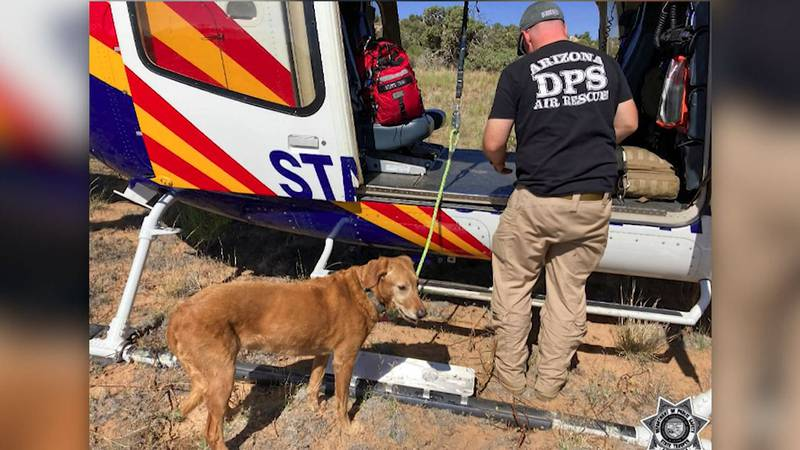 Rescuers saved a dog who had survived a plane crash and three days in the Arizona wilderness.