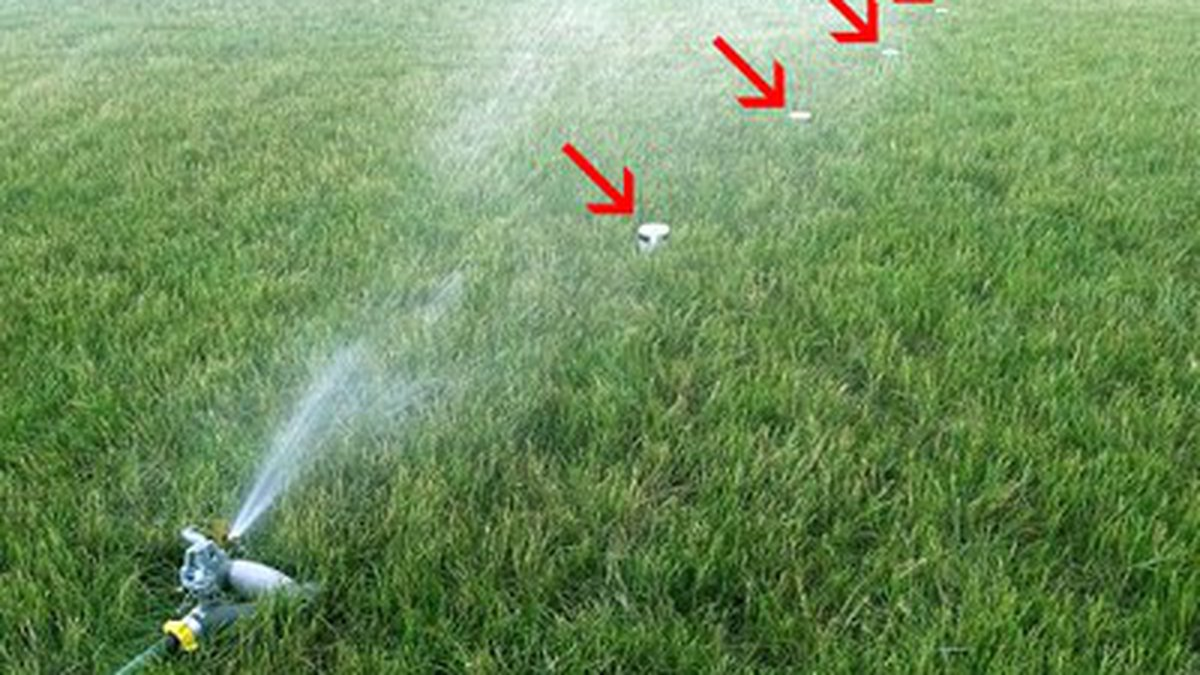 Many times include giving your lawn a big gulp of water instead of series of sips and watering...