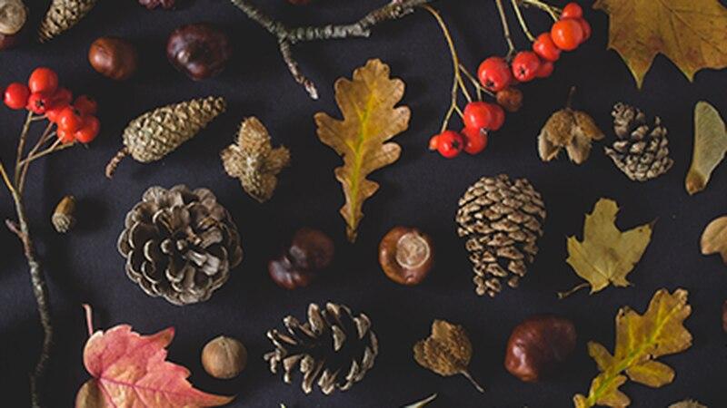 Thanksgiving foliage