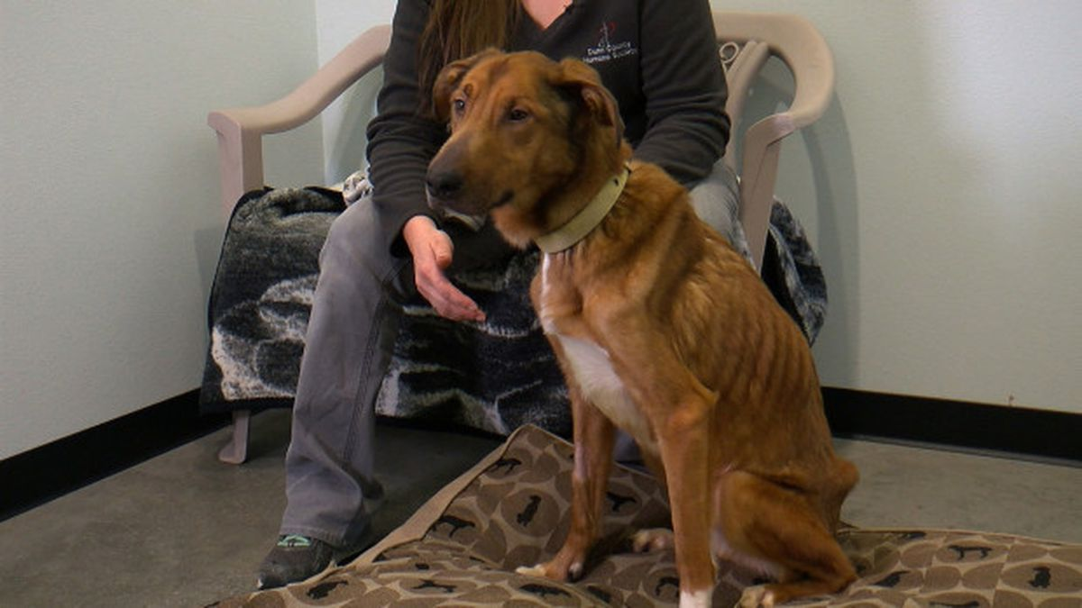 'He's A Fighter': Severely Malnourished, Emaciated Dog Making Miracle Recovery In Dunn County