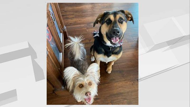 Dogs stop intruder from entering WF home