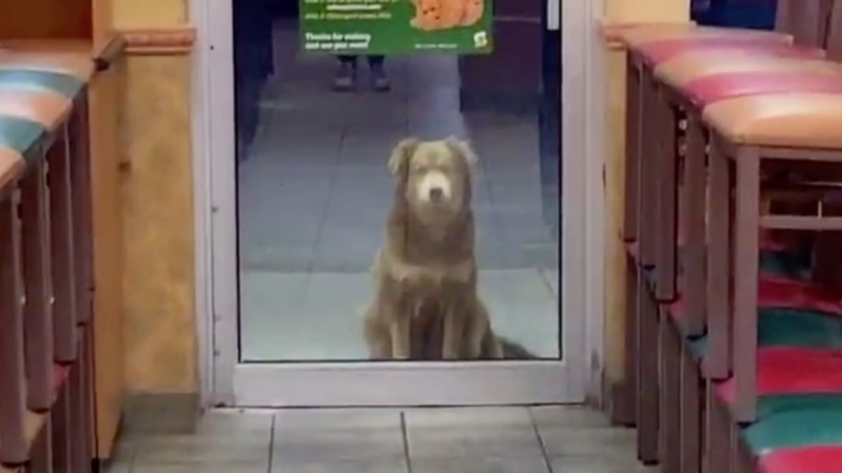 """""""Subway Sally"""" took the internet by storm after an employee posted a video of her on TikTok. He hopes her story inspires others to care about stray pets."""