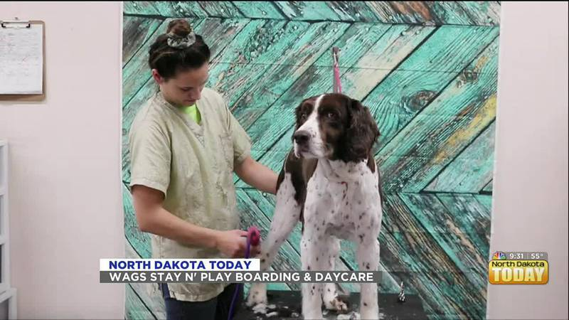 NDT - Wags Stay N Play Boarding & Daycare - September 17