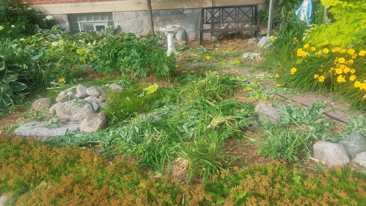The garden at St. Henry's Catholic Church in Perham MN was destroyed overnight