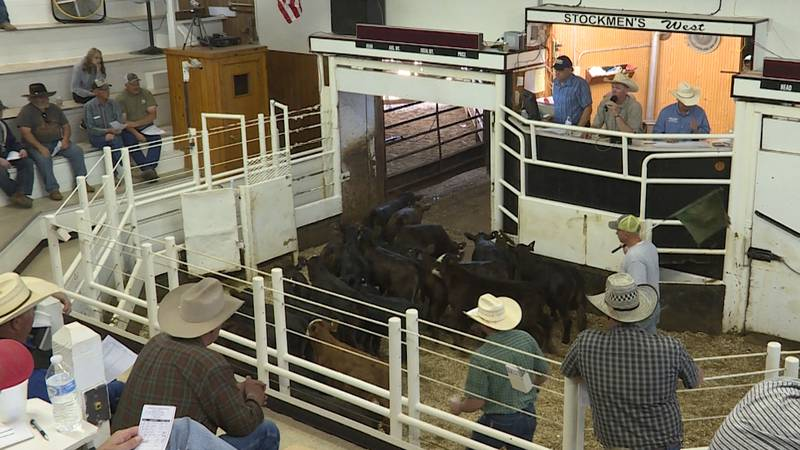The drought is still very real though, and ranchers are still searching for ways to make it...