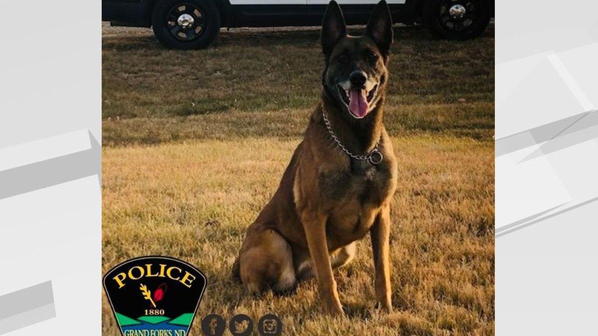 Grand Forks Police K9 Shelby