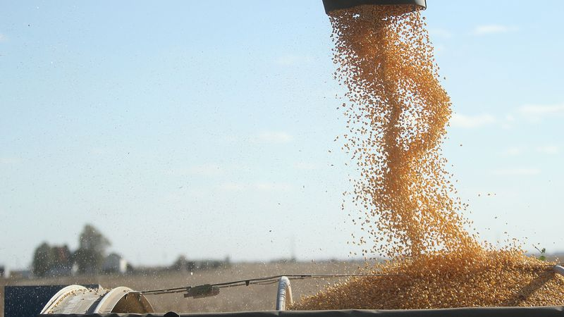 Roger Hotz loads corn into a hopper from his combine on Monday, October, 21, 2013 in Lone Tree,...